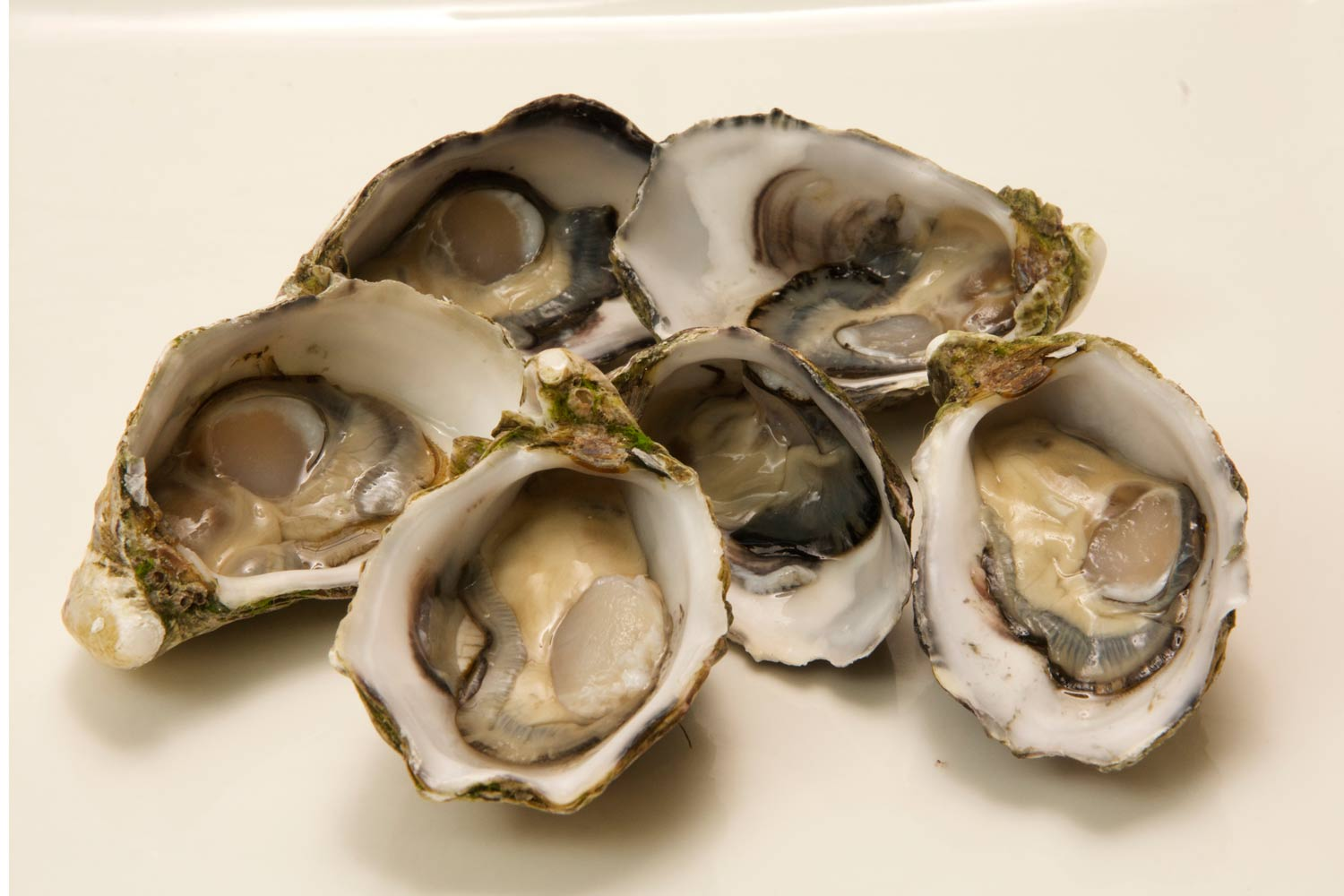 oysters